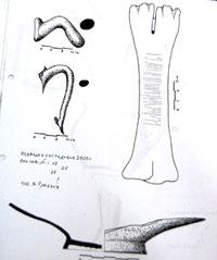 Керамика кости